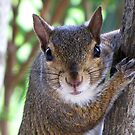 Do you have more nuts? by Irina777
