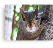 Do you have more nuts? Canvas Print