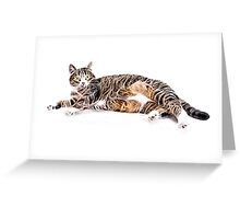 Wild nature - pussy #10 Greeting Card