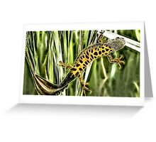 Wild nature - reptile #2 Greeting Card