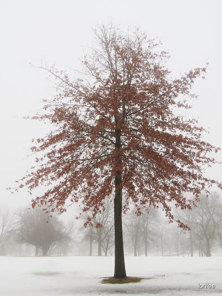 Red Oak in Winter by lorilee