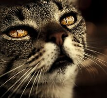 golden eye by Ingz
