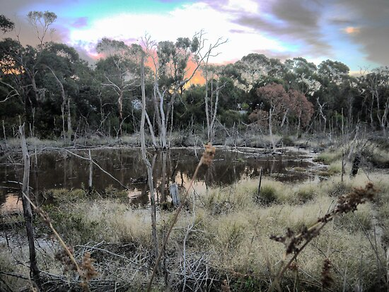 The Torquay Wetlands (2) by cullodenmist