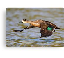 """""""Flying Duck"""" Canvas Print"""