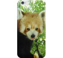 Cheeky red panda iPhone Case/Skin