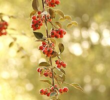 Red Blossoming Berries Growing from Trees by photoartful