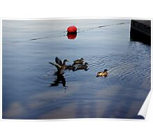DUCK FLAPPING WINGSS Poster