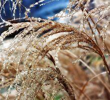 Magical Icecapades by KristaDawn