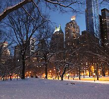 Central Park Lights by Alex Haff