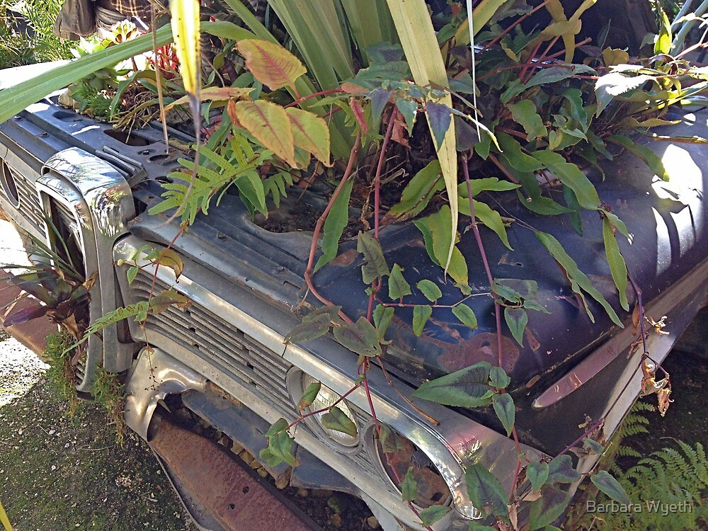 The Old Edsel by Barbara Wyeth