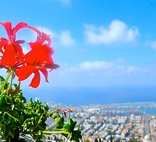 Flower over the City by shoshgoodman