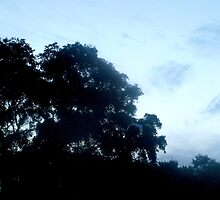 Soft silhouette by ♥⊱ B. Randi Bailey