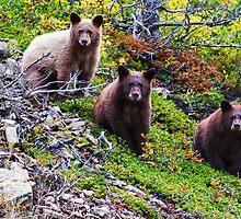 The Three Amigos - Black Bear Cubs by Mark Kiver