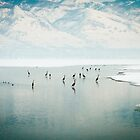 Gather of the Great Blue Herons by utahwildscapes