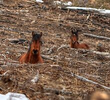 Foxhole Mustangs by JamesA1