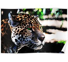 Green-eyed Leopard Poster