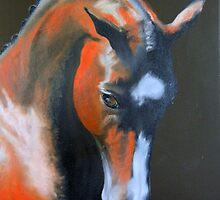 Quantador, Hanoverian Stallion by Jean Farquhar