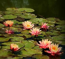 Water Lilies popping off the Screen by karina5