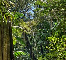 Rainforest, Vertical by ericrmc