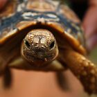 The Little Leopard Tortoise by Edward Ansett-Cunningham