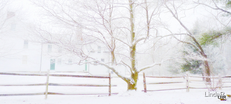 Winter White... by LindaR