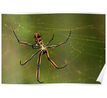 Nephila Orb-weaver spider Poster