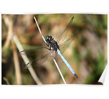 Electric blue Dragon Fly Poster