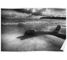 Driftwood on a  Beach Poster