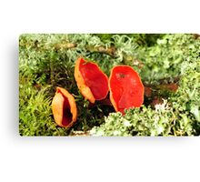 Orange Peel Fungus Canvas Print