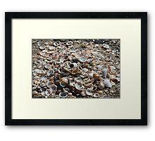 Lots of Shells Framed Print