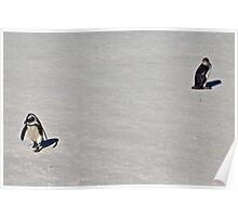Penguin Disagreement! Poster