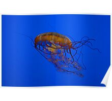 The Sea Nettle Poster