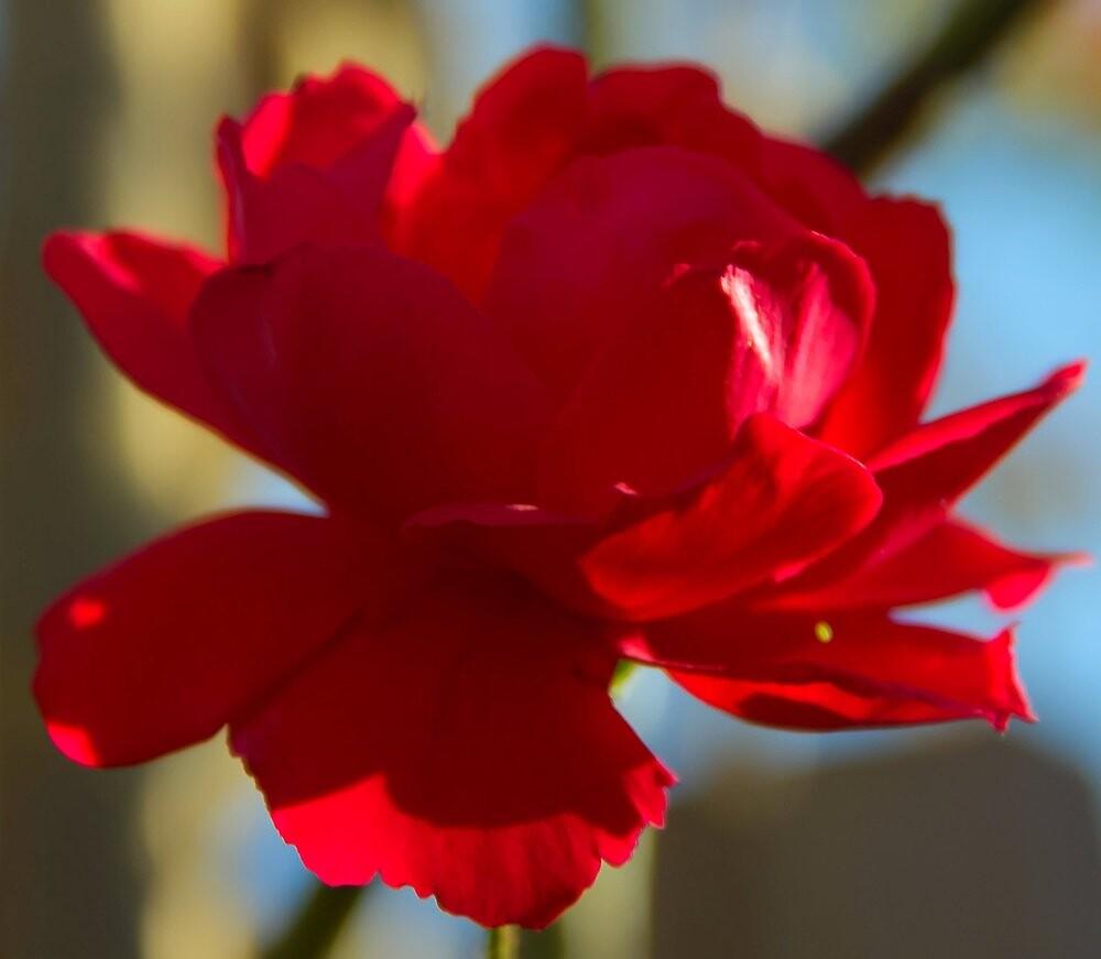 Newly Red by BlackTopaz