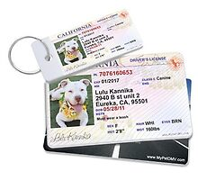 Get your pet a fully Personalized pet IDs from Mypetdmv by mypetdmv
