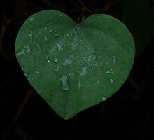 Leaf of love by ClaireWroe