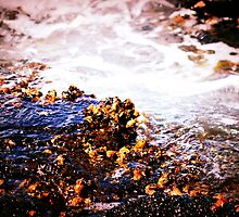 Sea Water by tropicalsamuelv