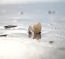 Seashell by the Seashore by Kae'tî Stolarski
