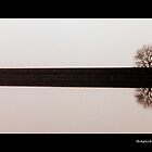 Lone Tree by thepicturedrome
