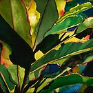 Ginger Leaves by Sally Griffin