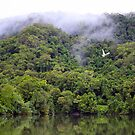Early Morning, Daintree River, Qld by Bevlea Ross