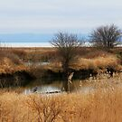 Reifel Bird Sanctuary by Tracy Friesen