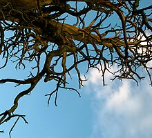 """""""Living Shapes in the Tree"""" 10/11 by SphericSenseS"""