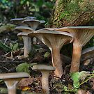 clitocybe in autumn sunshine by murch22