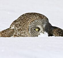 Stealth mode by Heather King