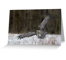 Great Gray Owl Intensity. Greeting Card