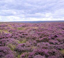 Purple Horizon by Francis Drake