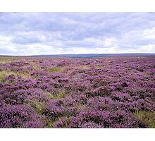 Purple Horizon Photographic Print