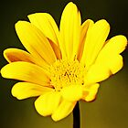 Yellow Flower by Darrick Kuykendall