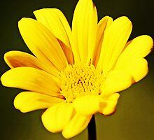 Yellow Flower by Darrick Kuykendall