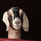 Hey Goat ! by Renee Blake